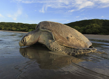 Olive Ridley Tour of Odisha