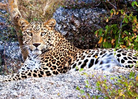 Wildlife Tours in Odisha